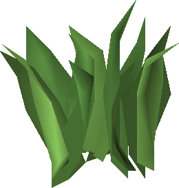 Irit leaf stage 1.png