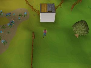Hot cold clue - east of Taverley herb shop.png