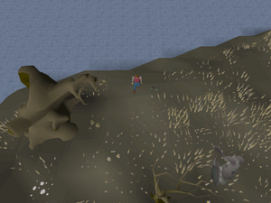 Hot cold clue - Lunar Isle north.png