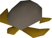 Sea turtle detail.png