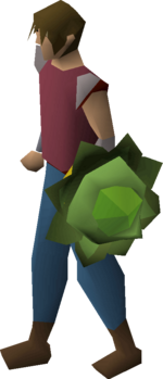 Cabbage round shield equipped.png