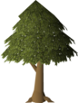 Tree (single canopy).png