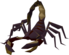 Poison Scorpion.png