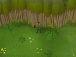 Emote clue - stomp enchanted valley.png