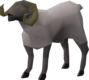 Sheep (1762) (historical).png
