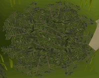 Leaves (trap).png