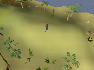 Hot cold clue - Karamja gnome glider.png