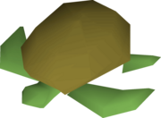 Raw sea turtle detail.png