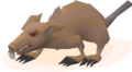 Angry giant rat (unused, 2).png