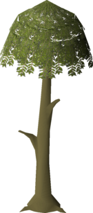 Willow Tree (stage 3).png