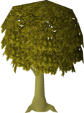 Diseased Oak (stage 4).png