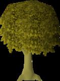 Oak (Farming) - OSRS Wiki