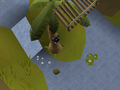 Ape Atoll Agility Course (2).png