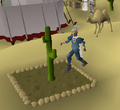 Cactus patch.png