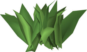 Irit leaf stage 2.png