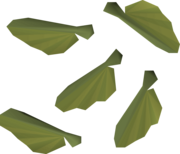 Maple seed detail.png