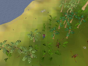 Hot cold clue - West of Brimhaven.png