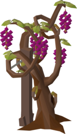 Grape vine stage 8.png