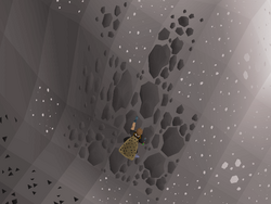 Wilderness Agility Course (5).png