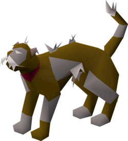 Wily cat (grey and brown) pet.png