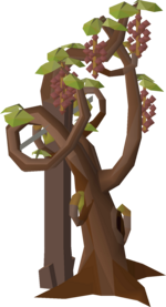 Grape vine stage 6.png
