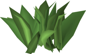 Irit leaf stage 3.png