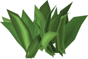 Irit leaf stage 5.png