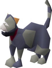 Kitten (grey and blue).png