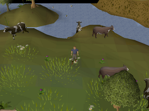 Hot cold clue - Lumbridge cow field.png