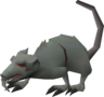 Blessed giant rat (2).png