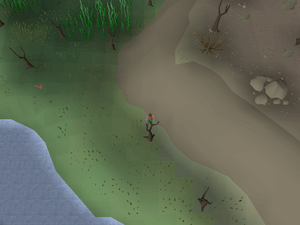 Hot cold clue - south-west Kebos Swamp.png