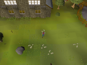 Hot cold clue - south of Draynor bank.png