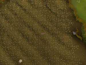 Hot cold clue - Draynor Village wheat field.png